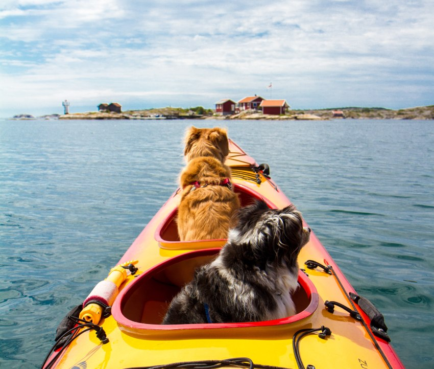 Two small dogs in a kayak cockpit