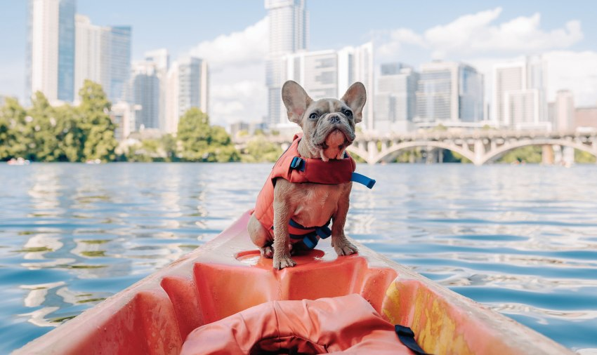 A small dog sitting on top of a kayak
