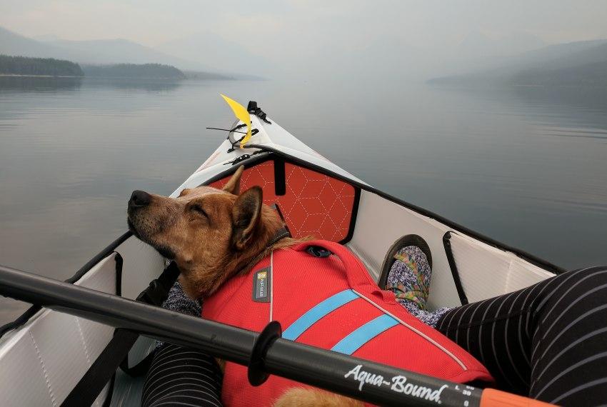 Dog taking a nap in a kayak