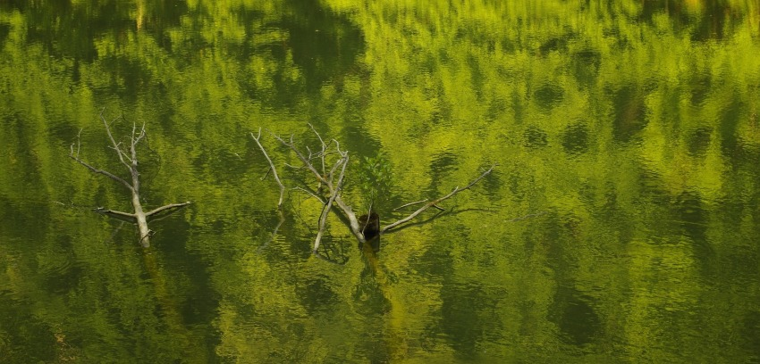 Fallen tree branches in the water