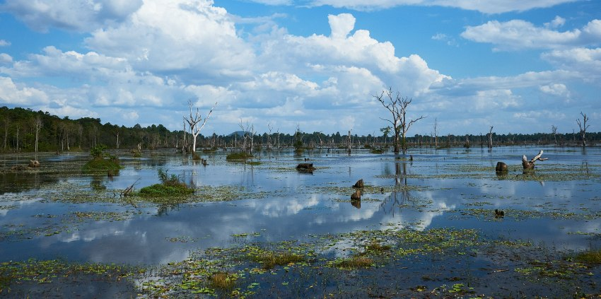 Swampy area under the blue sky and white clouds
